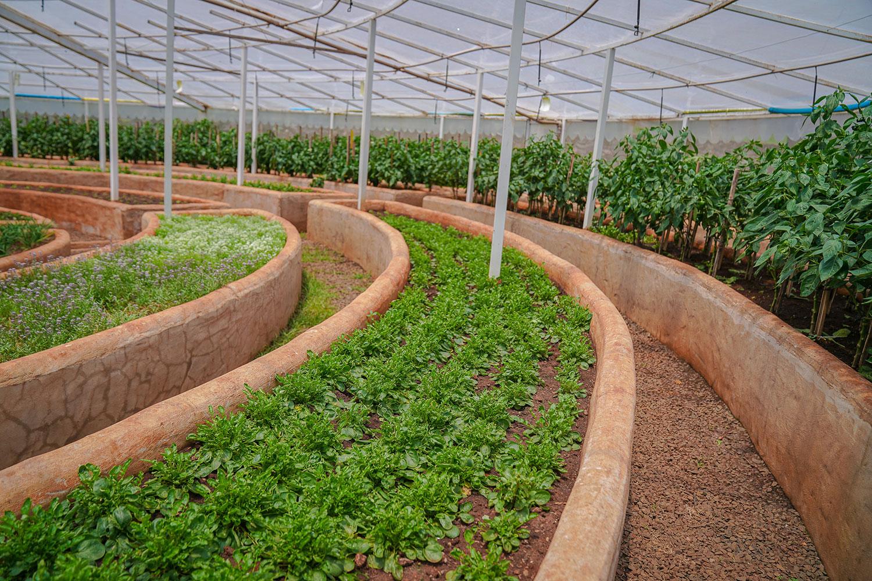 plantio sustentável