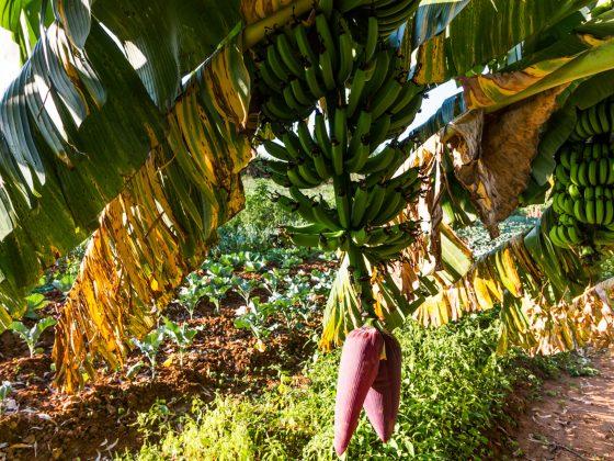 produtores de alimentos orgânicos