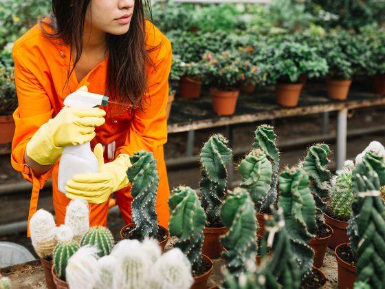 pesticida organico