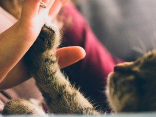 beneficios de ter um animal de estimação em casa