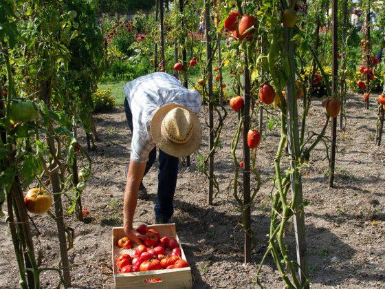 agricultor que mostra qual a importância da agricultura familiar