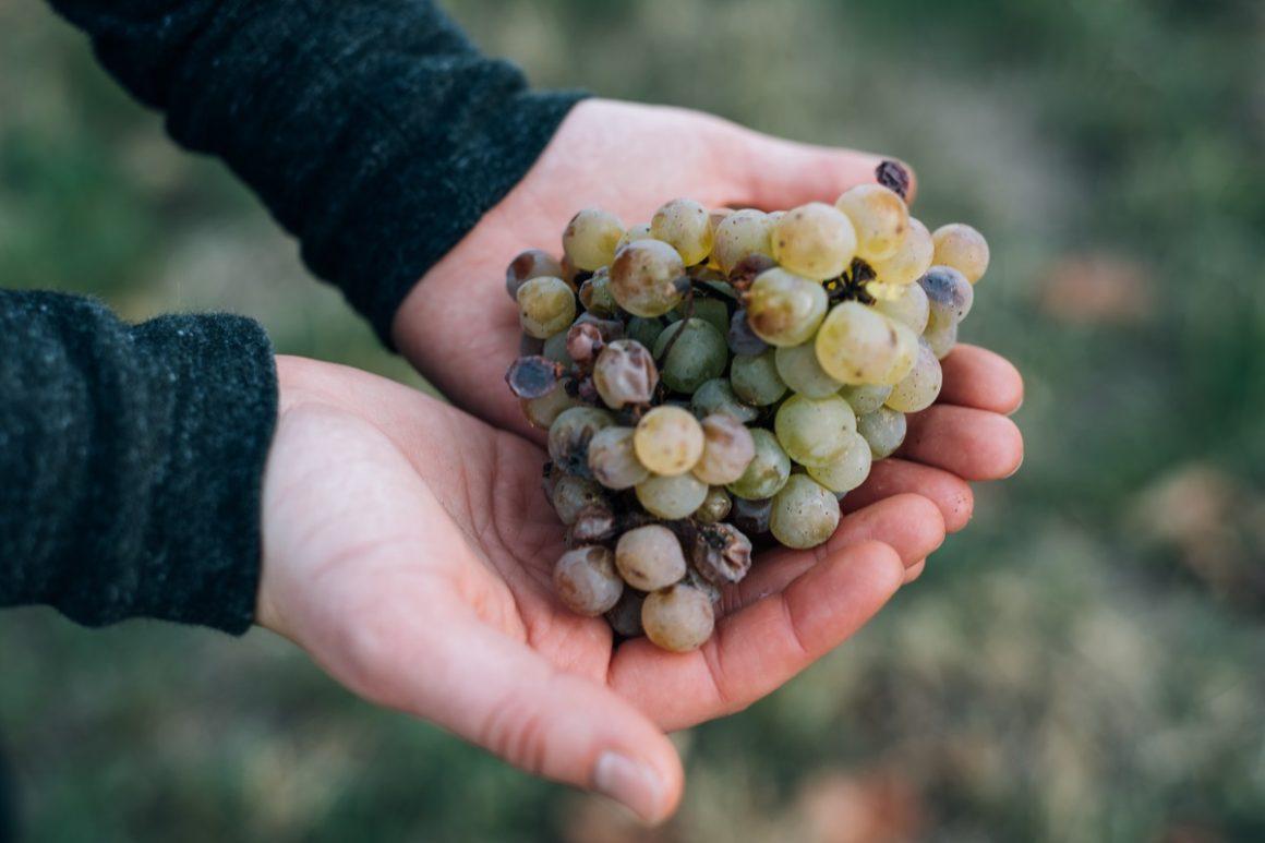 produtos orgânicos uva